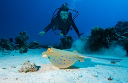 Diver and Bluespotted stingray