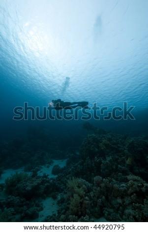 Diver and ocean #44920795