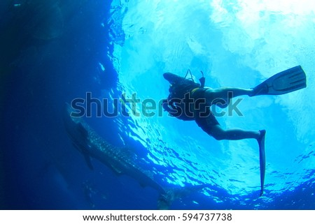 Diver and Whale shark #594737738
