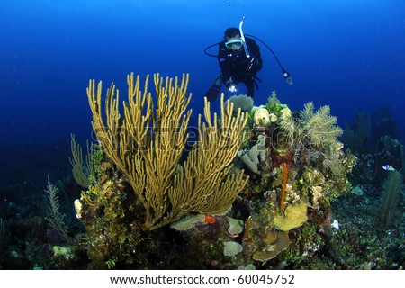 Diver at the Belize barrier reef