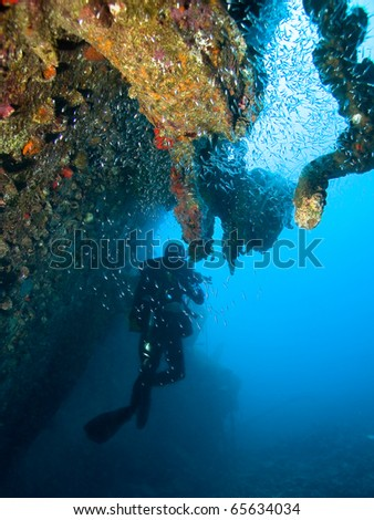 Diver by the wreck
