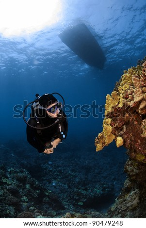 Diver checking out some unusual Coral formations in South Kona Hawaii