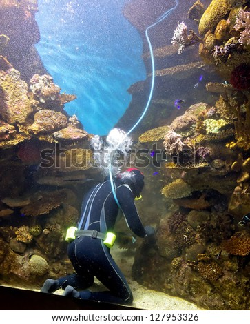 diver cleans aquarium, Barcelona, Spain stock photo