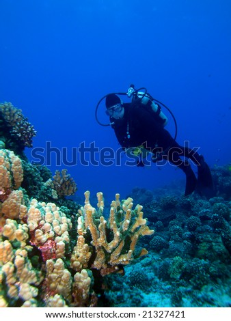 Diver looking at a Lighted Reef in Maui Hawaii