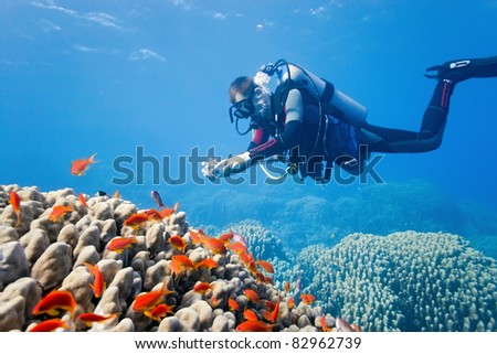 Diver on the fire coral - stock photo