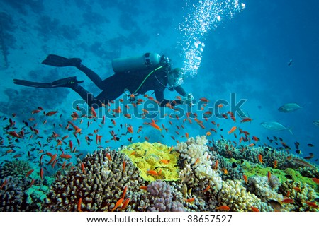 Diver on the reef - stock photo