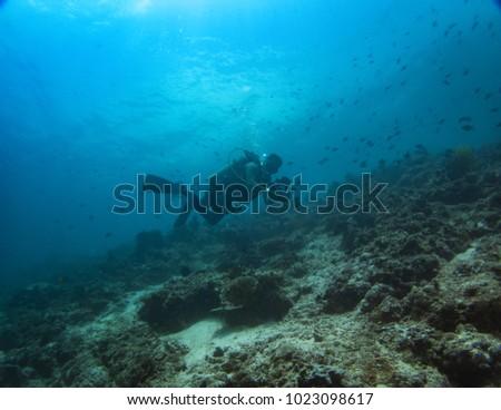 diver photographer in anilao batangas #1023098617