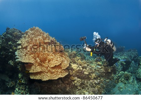 Diver photographing Mushroom Coral in Kona Hawaii
