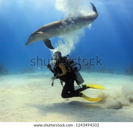Diver posing with a dolphin #1243494502