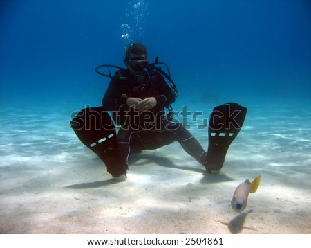Diver sitting on sand looking at a fish.