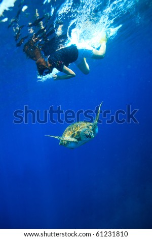 Diver snorkeling to see green turtle