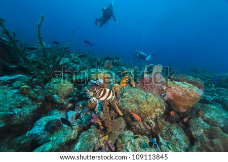 Diver swimming over a coral reef in Barbados