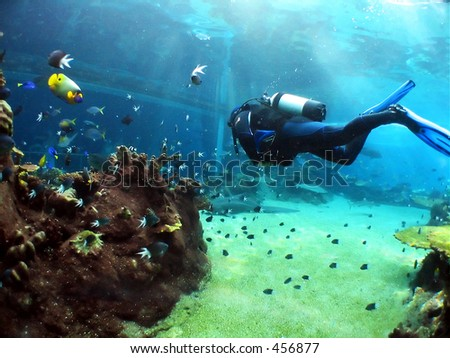 Diver swimming to large underwater viewing window