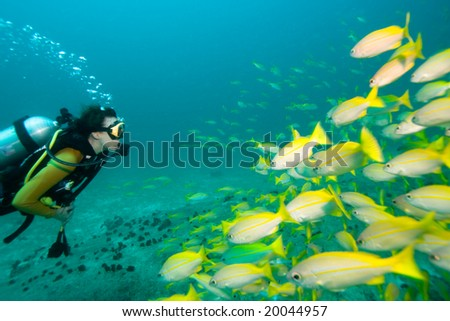 Diver swimming towards a school of yellow Snappers