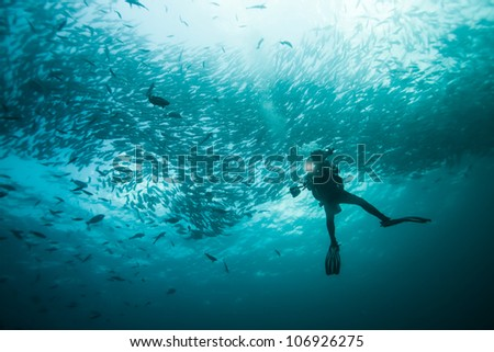 diver swims with fish #106926275