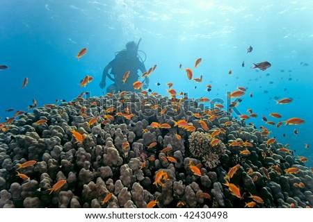 Diver under  coral reef
