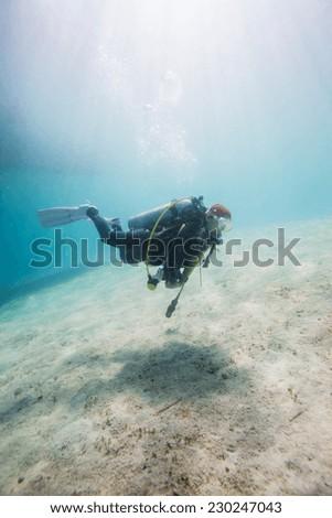 diver underwater #230247043