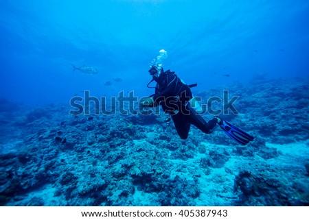 Diver Underwater #405387943