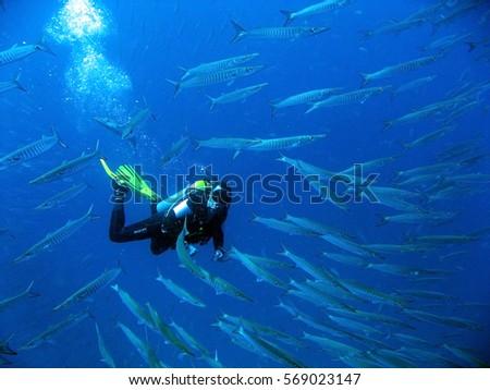 diver underwater #569023147