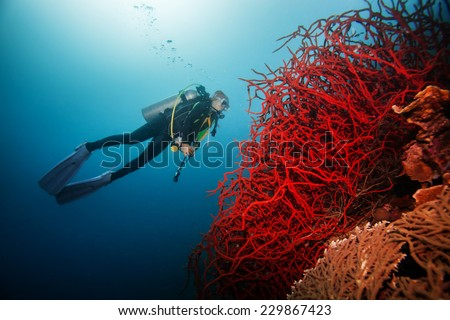 Diver Underwater swimming around giant red coral