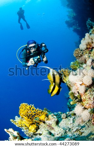 Diver with camera along the reef, underwater photographer, Red Sea