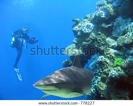 Diver with camera and shark