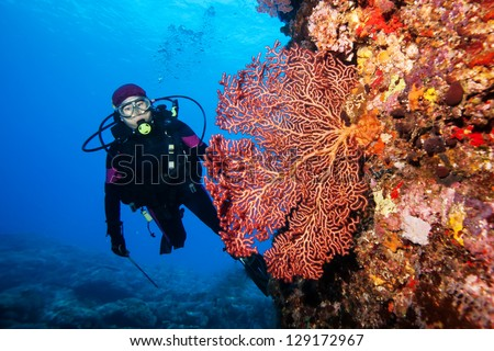 diver with giant fan coral