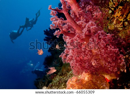 Divers and coral reef