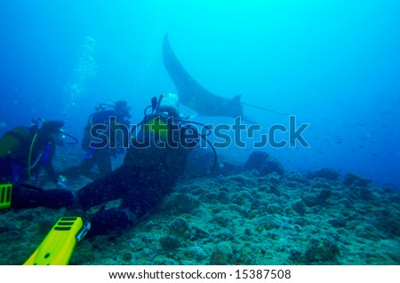 Divers and manta, Ari-Atoll. Maldives