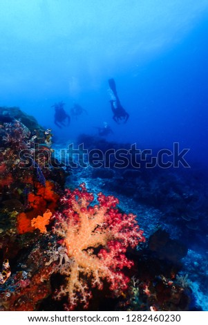 Divers and purple soft coral #1282460230