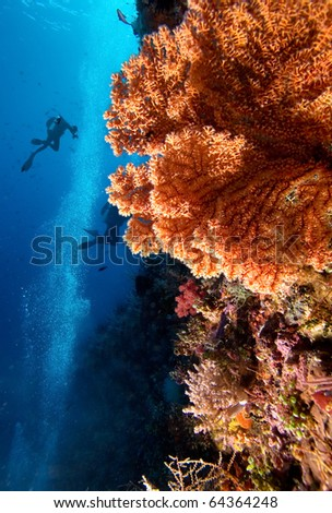 Divers by coral reef - stock photo