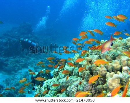 Divers on the coral reef in the red sea