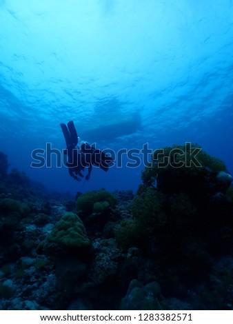Divers Scuba dive in Rabaul , East New britain  #1283382571