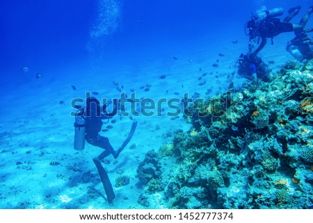 divers swimming underwater near coral reefs #1452777374