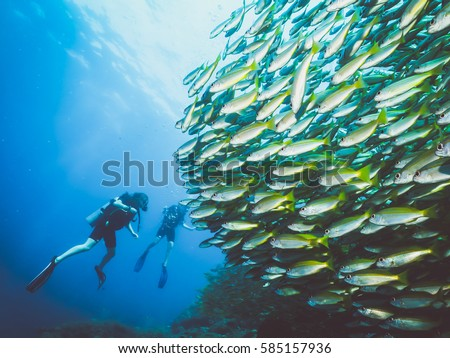Divers with a school of fish, Phi Phi Islands, Thailand.