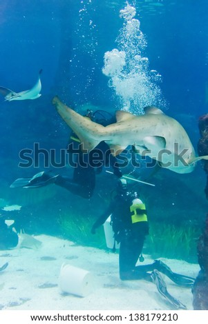 Divers with sand tiger shark (Carcharias taurus)
