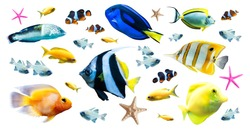 Diversity of bright tropical fish isolated on white background