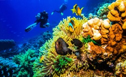 Diving at coral reef underwater. Underwater diving scene. Divers underwater