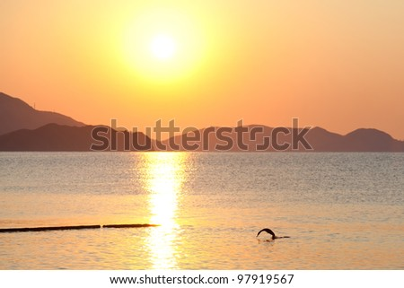 Diving gannet in sunrise sea