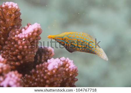 Diving in Seychelles, Anse Volbert, Praslin, Africa