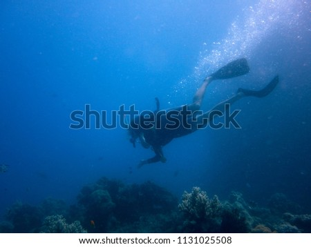 Diving the Great Barrier Reef, Australia #1131025508