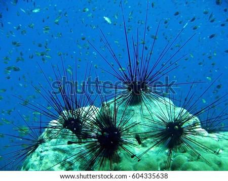 diving underwater life #604335638