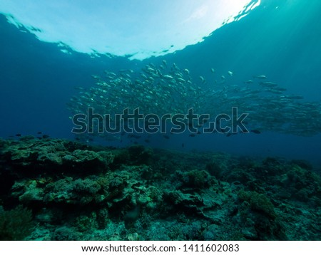 diving with corals and big school of fish #1411602083