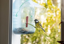 DIY bird feeder made from two used plastic bottles. Concept of things reuse and natural resources preserving. Step IV. Waiting guests.