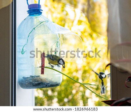 DIY bird feeder made from two used plastic bottles. Concept of things reuse and natural resources preserving. Step IV. Waiting guests. ストックフォト ©