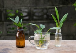 DIY flower vases from unused bottles and clear glass can put plants to purify the air.