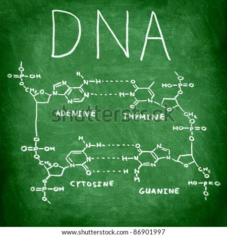 DNA chemical structure on chalkboard showing the four bases of DNA