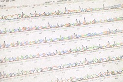 DNA sequencing result sheet