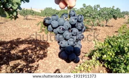 Do you eat organic grapes? Stok fotoğraf ©