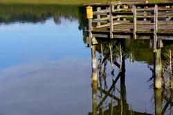 Dock, in Warriors Path State Park, looks toward Duck Island in Warriors Path State Park.  Dock is dedicated to being a Fish Habitat Site.  Cedar trees are tied to dock for feeding fish.